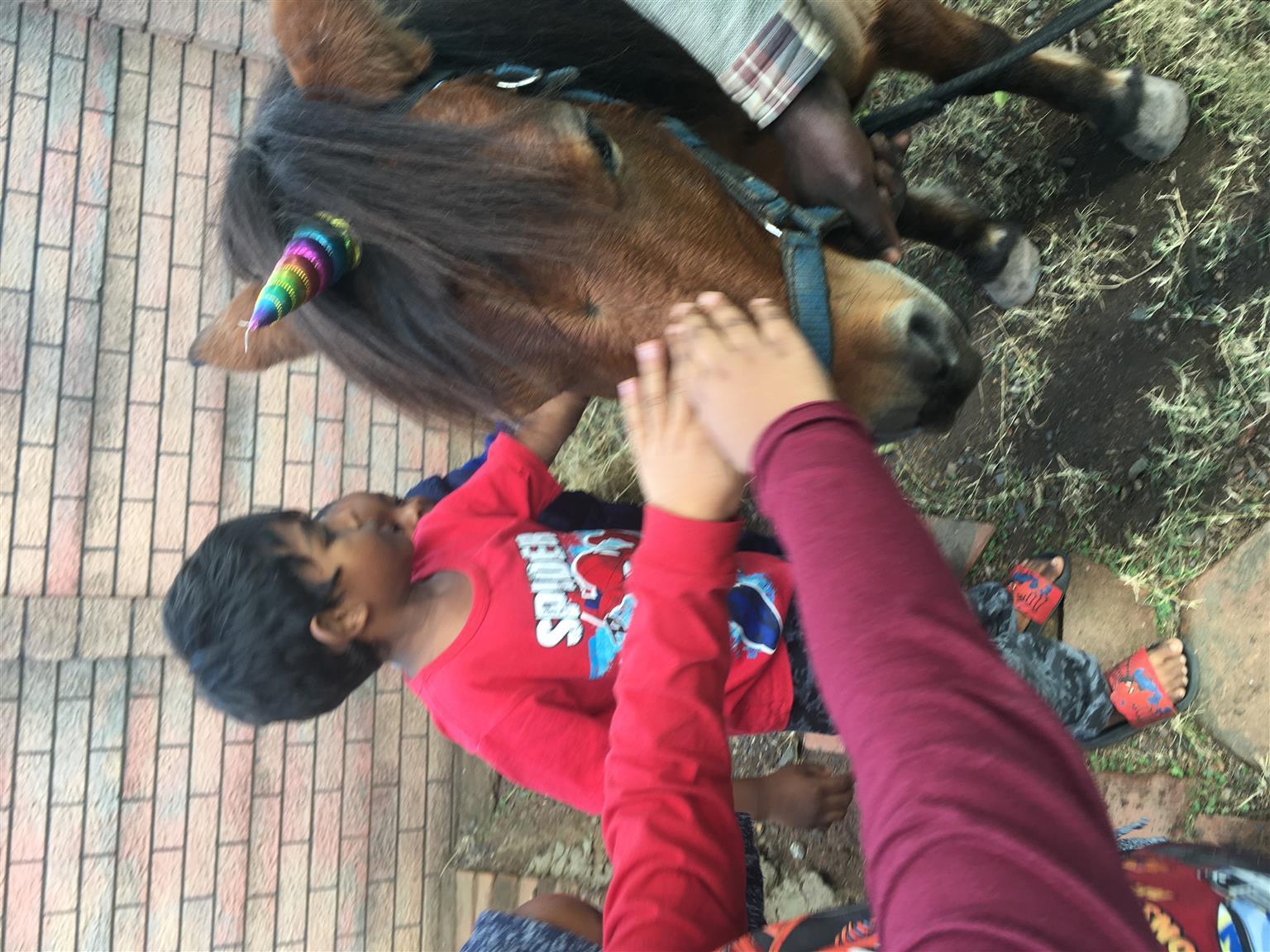 Party pony rides