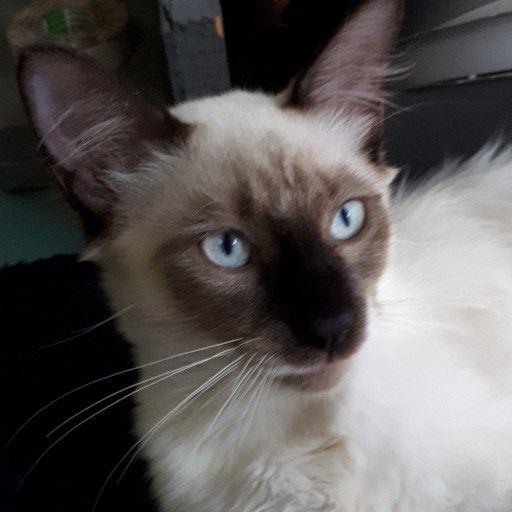 ragdoll kittens | Junk Mail