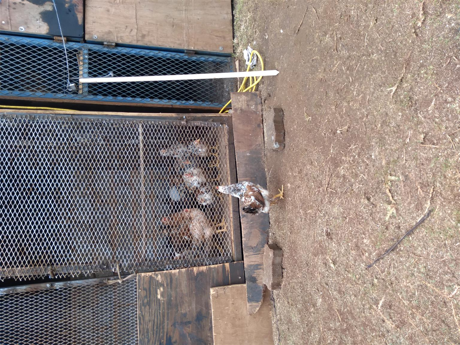 Selling Boschvelder chickens 2-8wks old. All chickens ready from 12 weeks old.