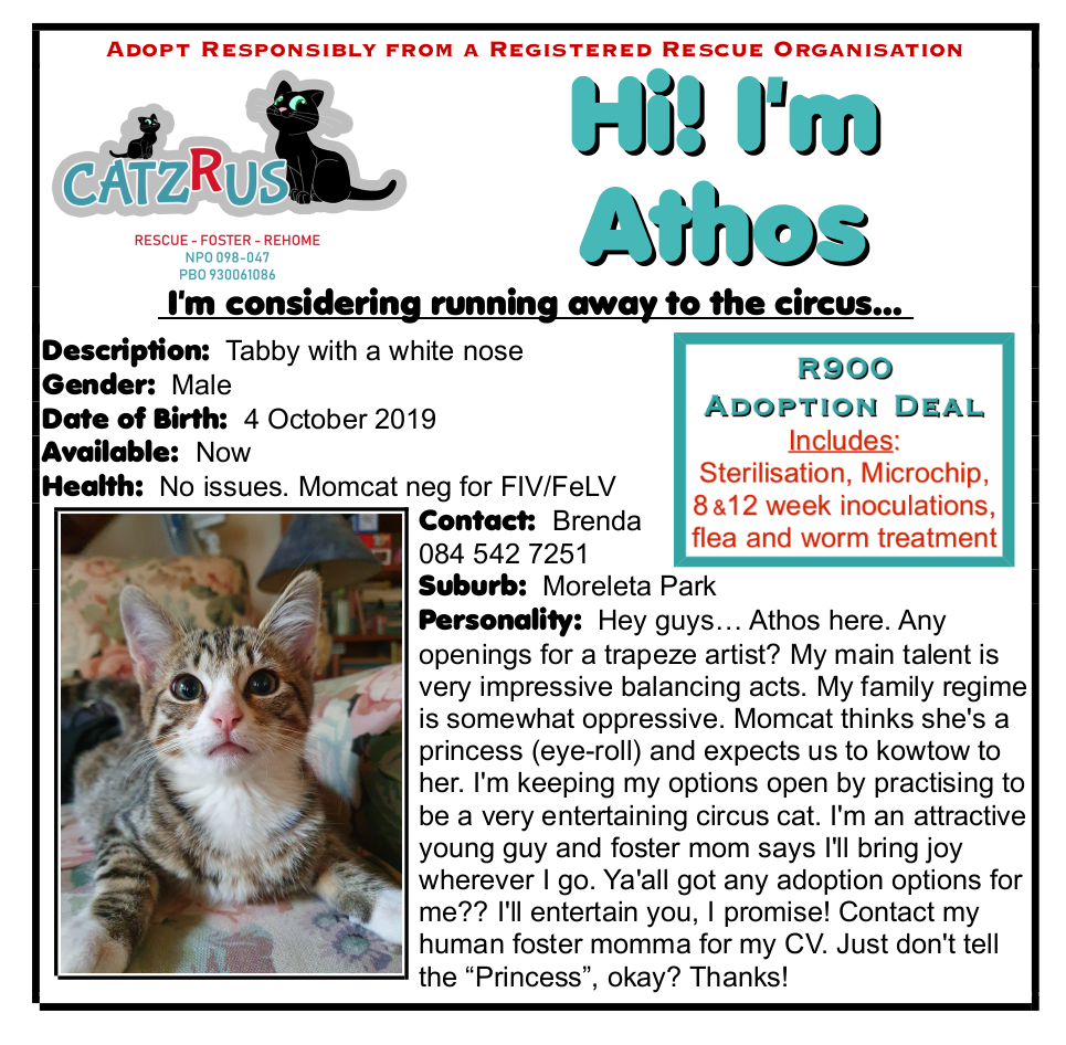 Athos and Pawthos - vet-checked kittens to adopt from CatzRus. Incl Sterilisation, inoculations, microchip, etc