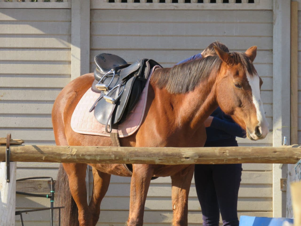 Showstopper mare for sale