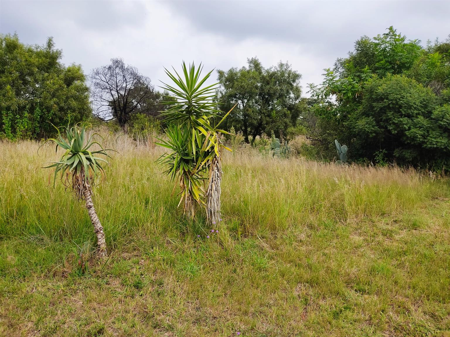 Vacant Land Agricultural For Sale in Laezonia
