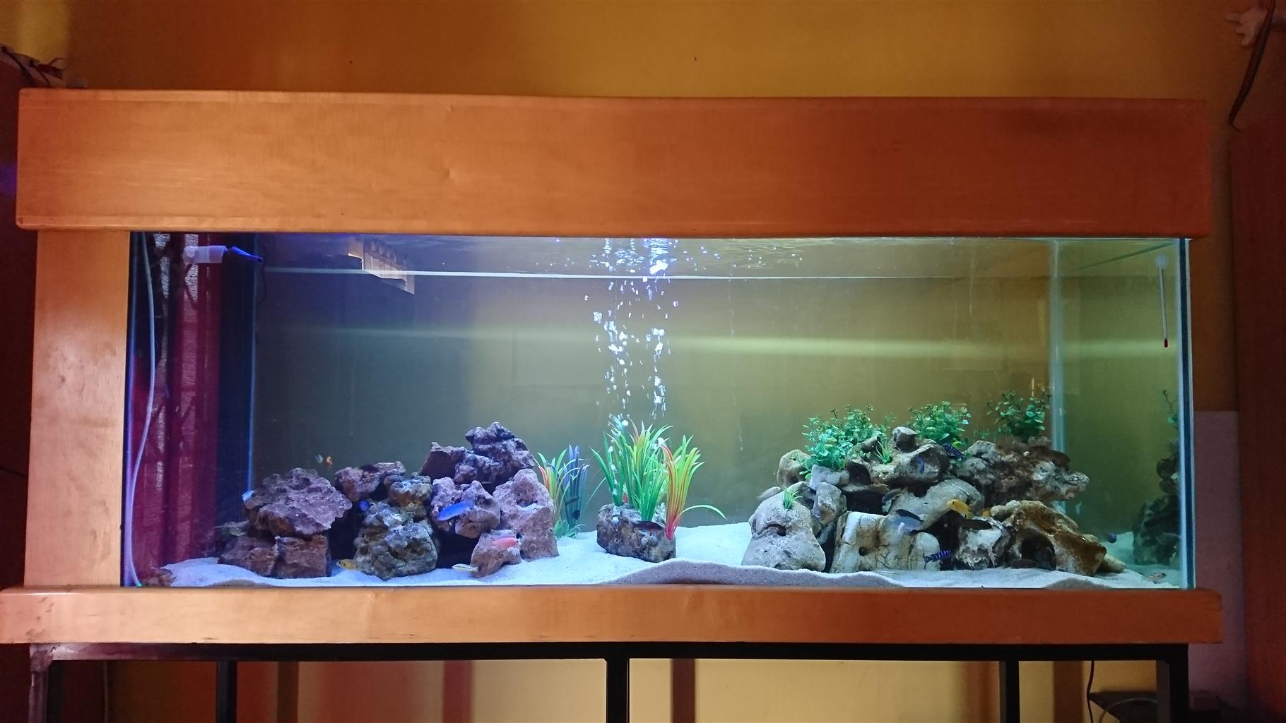 1.8m aquarium