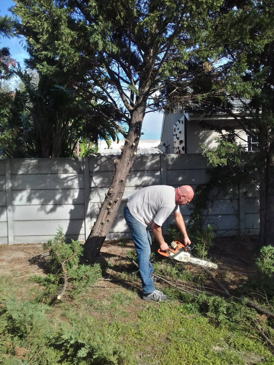 PROFESSIONAL TREE FELLING SERVICES OFFERED IN CAPE TOWN