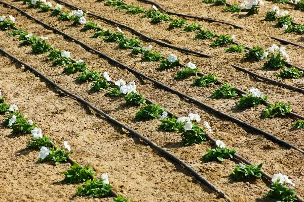 Drip irrigation and pumps for sale