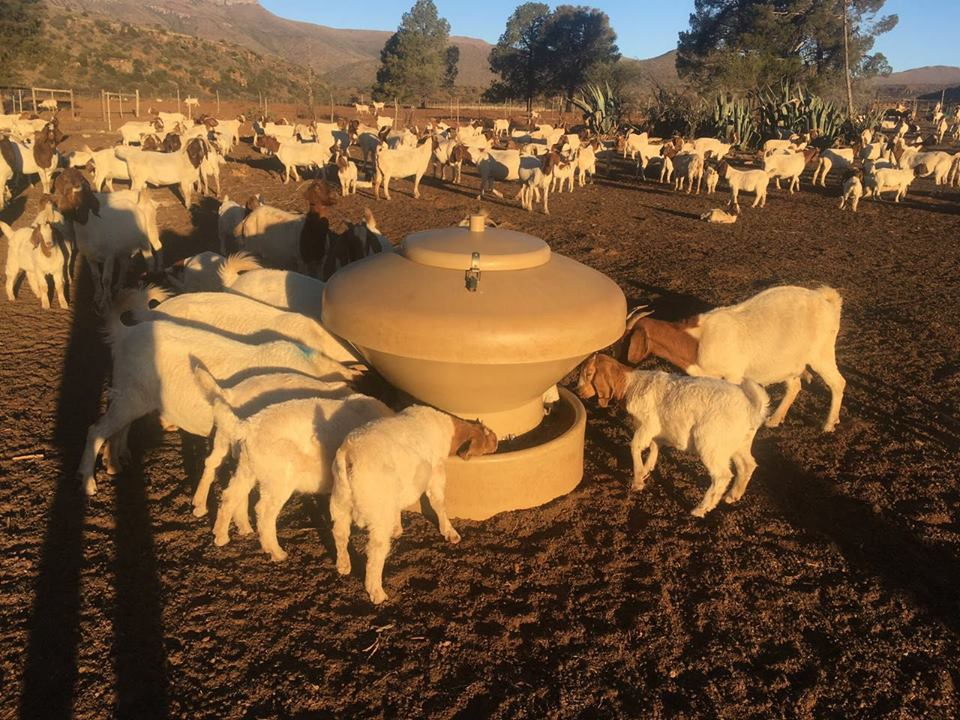Feeder for Sheep/Goats and Game animals