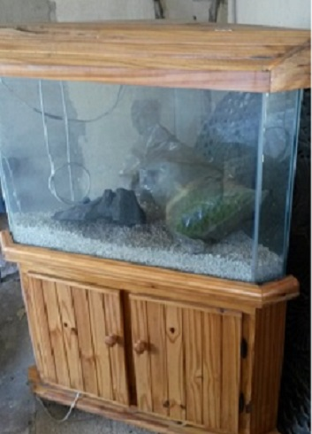 Large Fish Tank Set In A Cabinet For Sale With Some Accessories