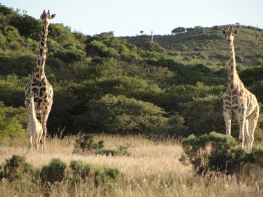 OuteniquasBosch Wildlife Village in the Garden Route - The place for you - Perfect Investment