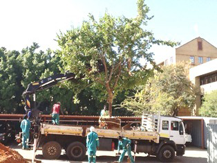 Winter is tree transplanting time!!!!!