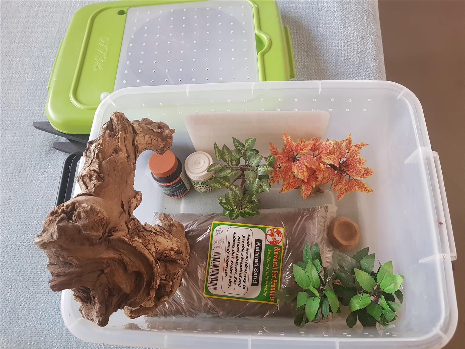 Large Bearded dragon home