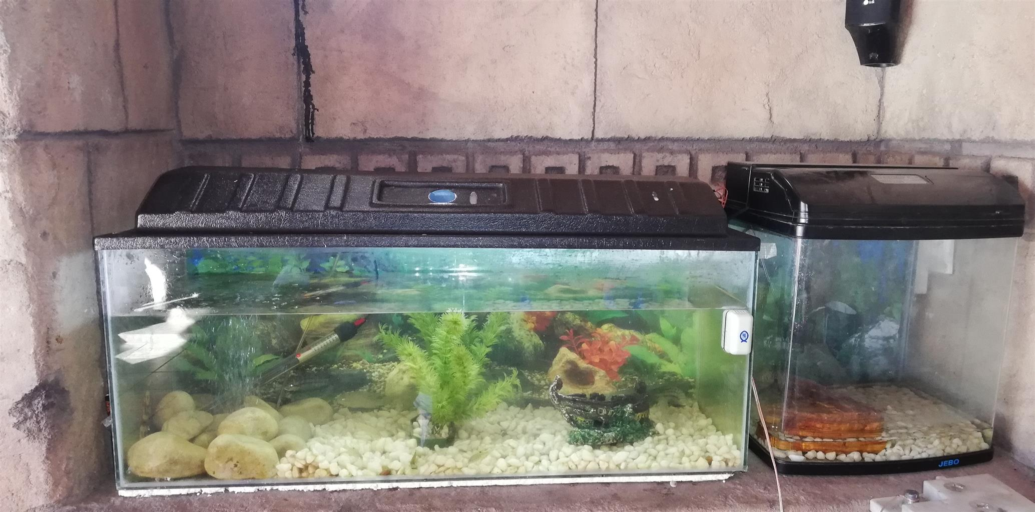 900mm Fish tank