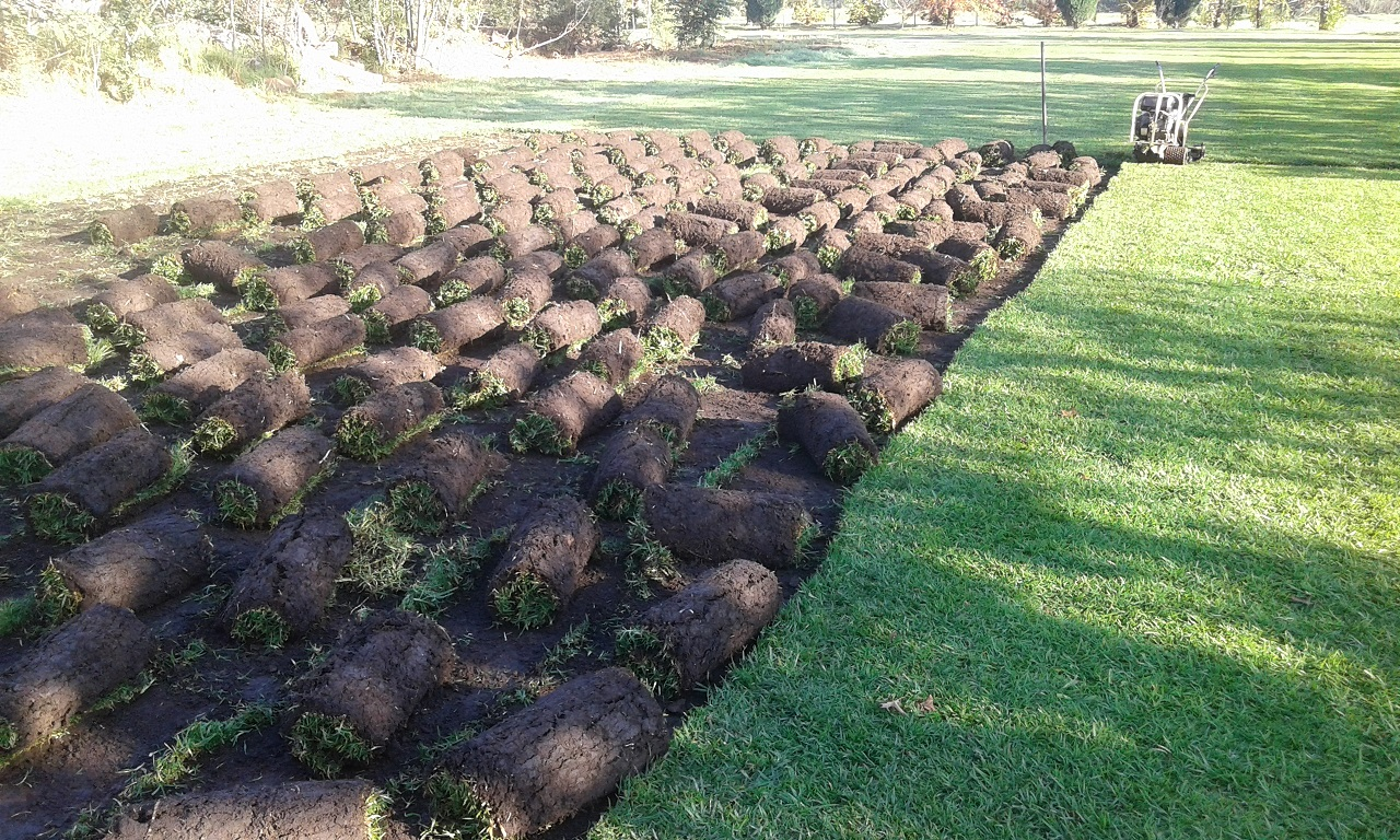 Luscious Lawn You've Always Wanted in Winter