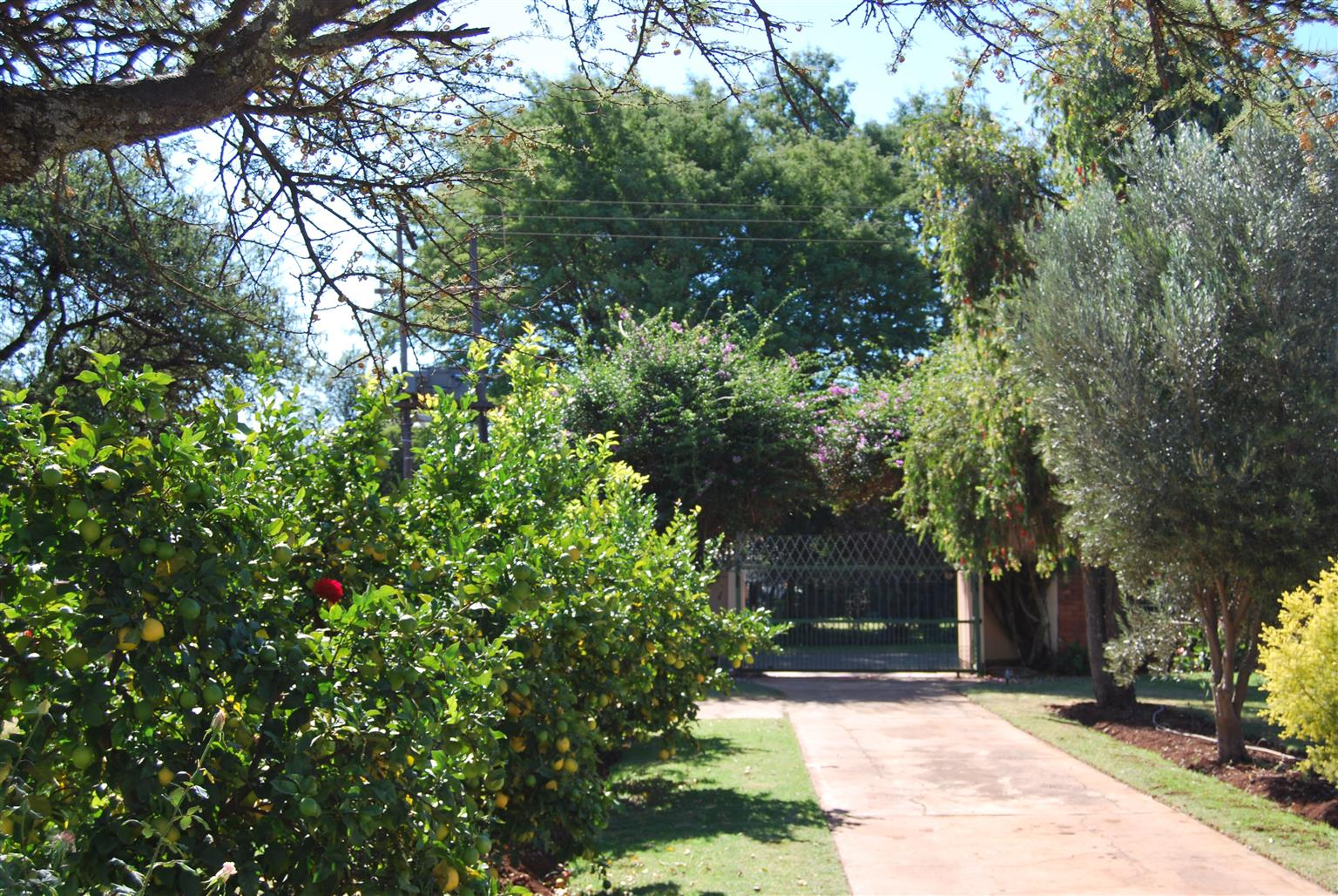 Lemon Tree, Agricultural Farm for small farmer and additional rental income, Pretoria