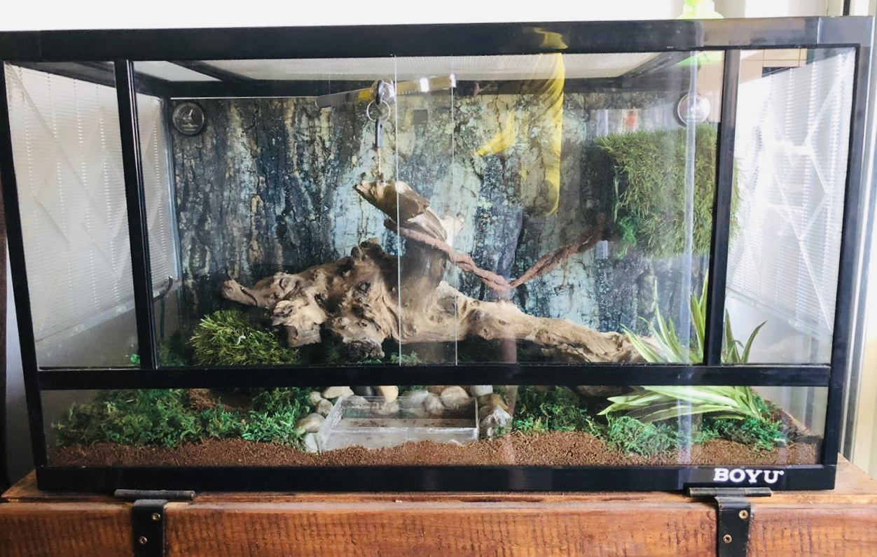 2 year old Ball Python, Terrarium and extras