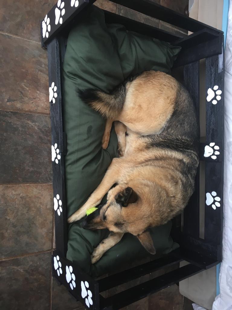 Dog beds for sale custom made