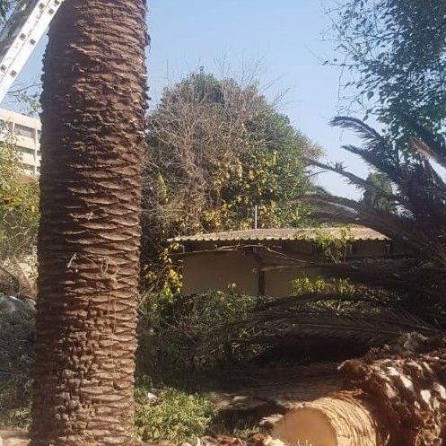 tree felling and gardern maintenance