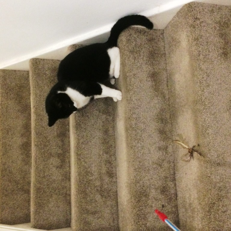 Reliable PET SITTING in your home..