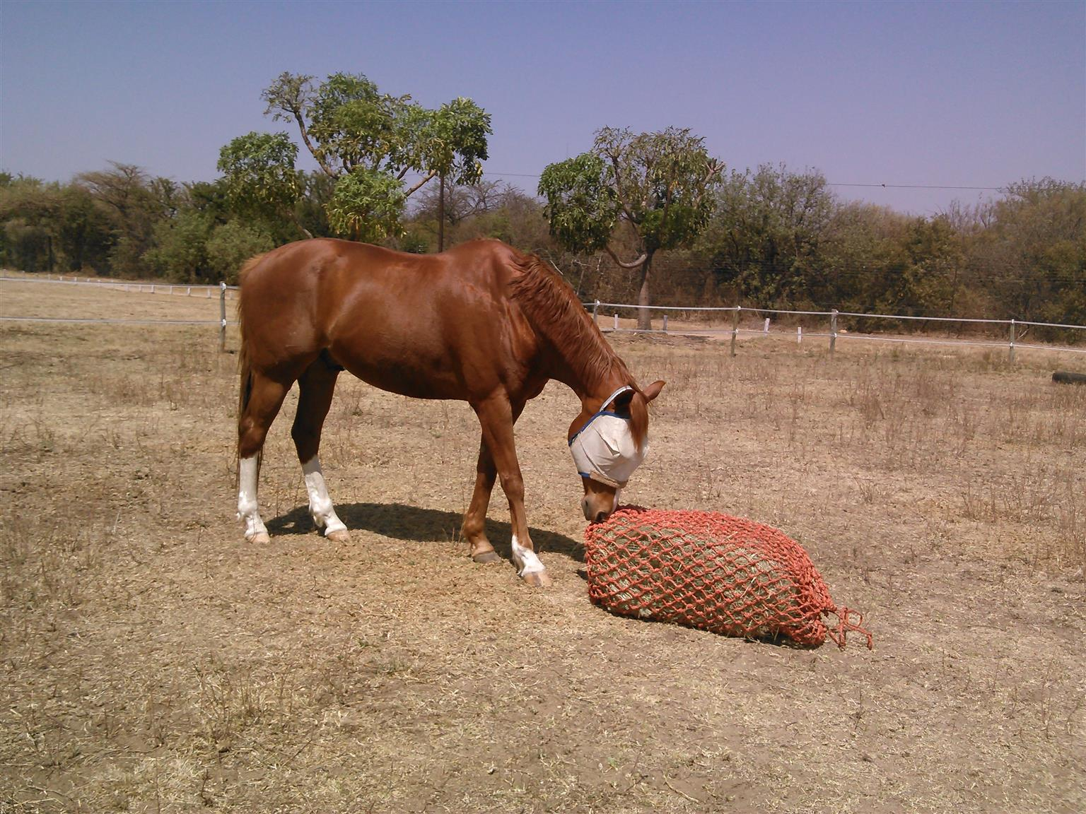 Slow feeder haynets for sale