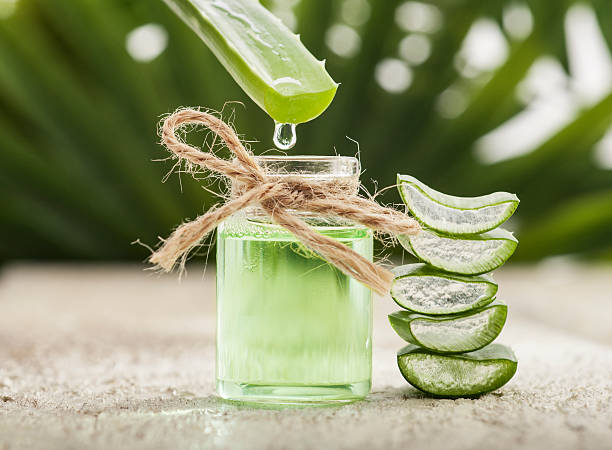Aloe Vera ( Medicinal ). Spekboom ( Best carbon sequester + medicinal ) 6 types of aloes. Succulents and much more.