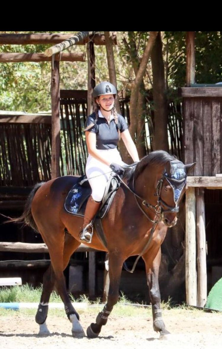 VERY WELL SCHOOLED WARMBLOOD X TB HORSE FOR SALE