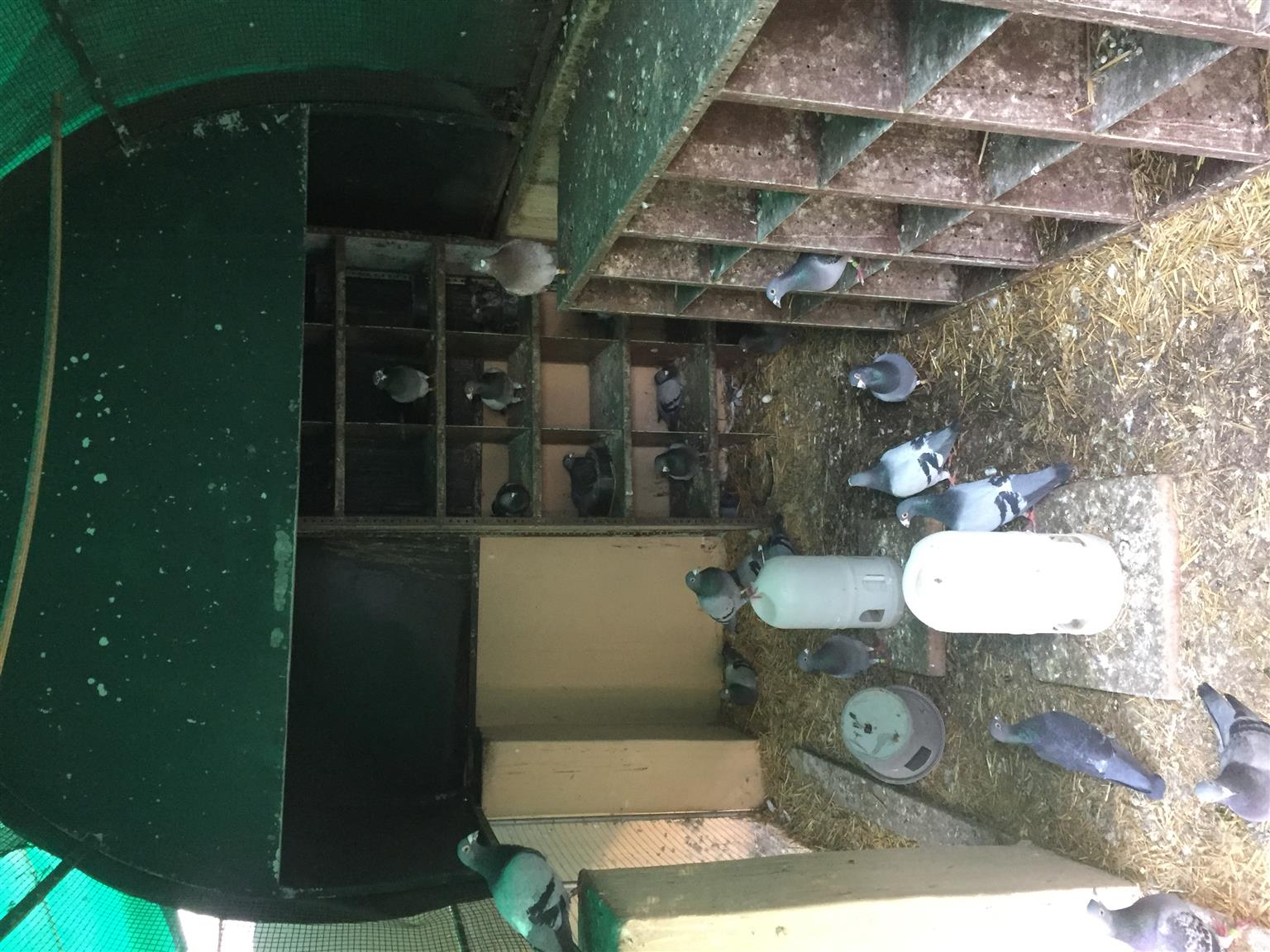 Racing pigeon Loft, 2 breeding Lofts