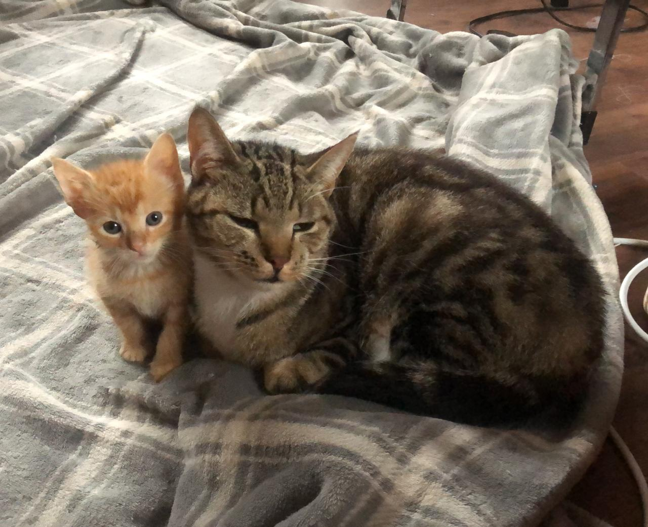 We have over 80 cats and kittens ready for adoption from our foster homes.