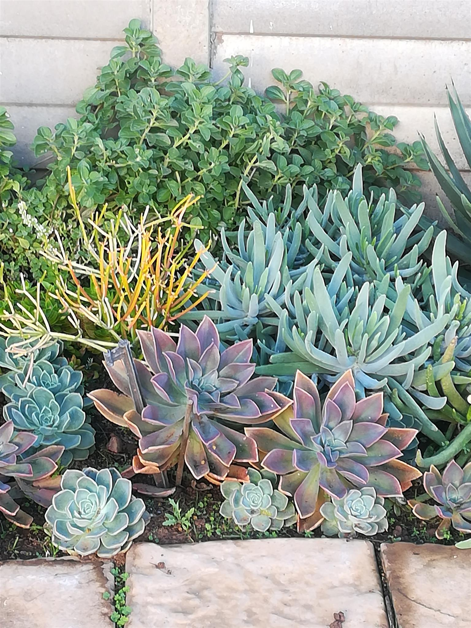 Colourful succulents &  ground covers