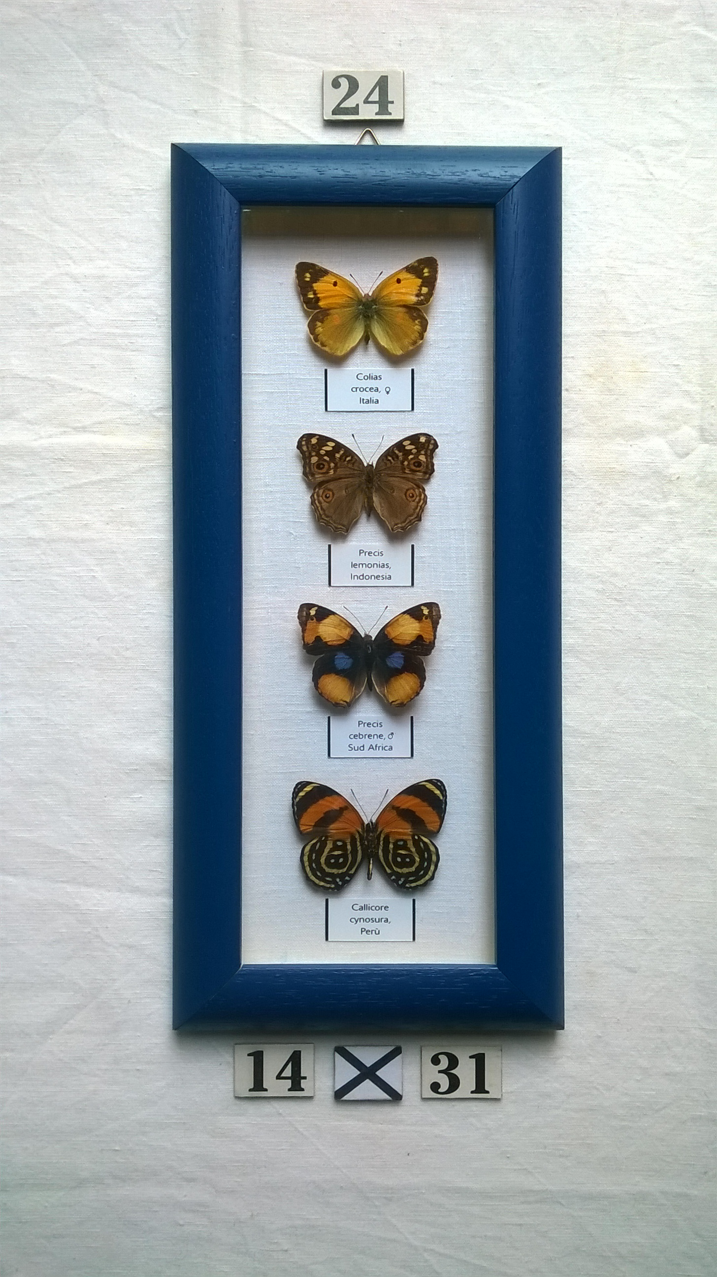 Real framed butterflies | Junk Mail
