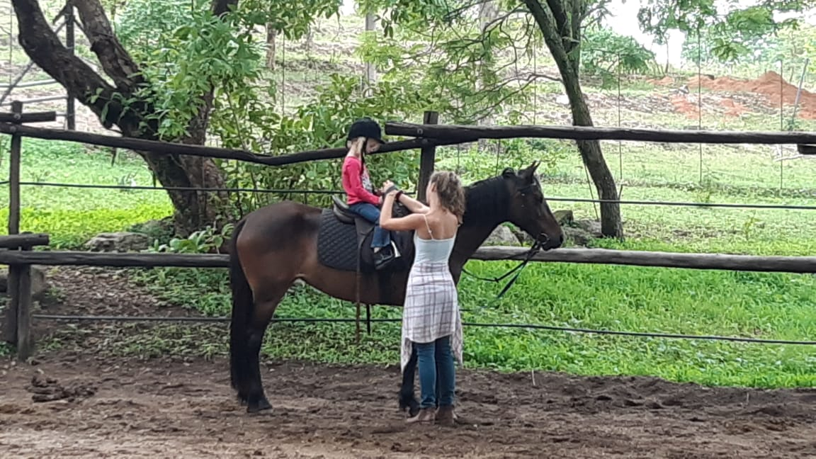Child friendly horse for sale (neg)