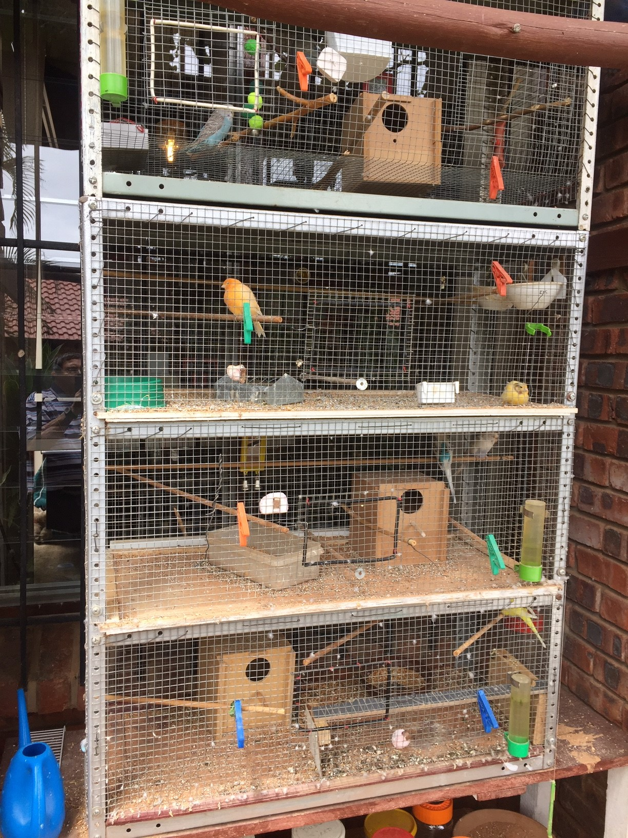 Bird Cages + budgies at only R60 ea. Cages reduced to R750- NB huge BARGAIN if ALL is taken.