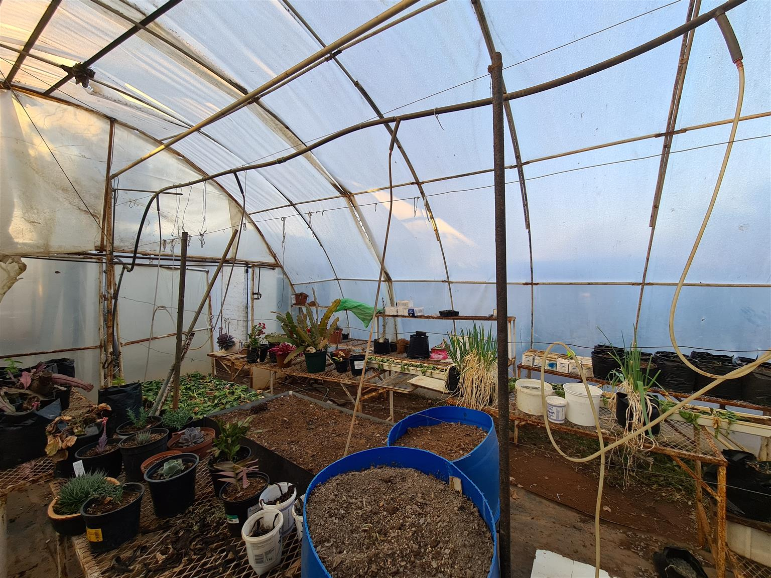 TUNNEL HOTHOUSE