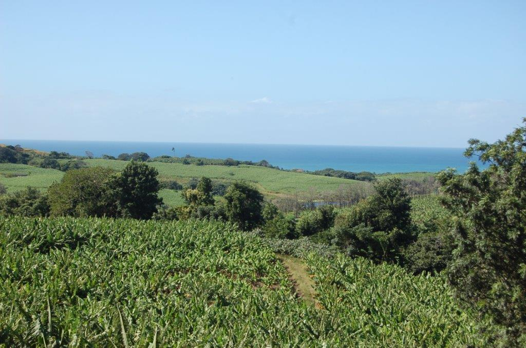 13 Ha Banana Macadamia Farm For Sale Marina Beach Kzn South