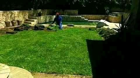 Roll on lawn