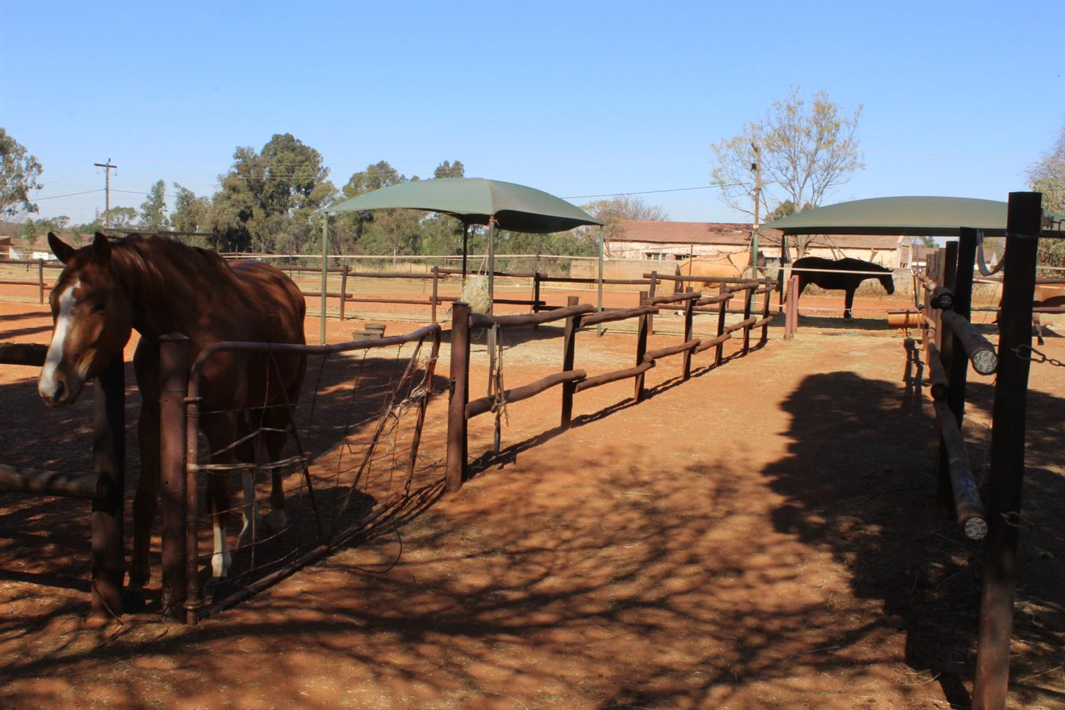 BENONI-EQUESTRIAN CENTRE-4.2 Ha-40 GOOD STABLES-ALL EXTRAS  ARE HERE!! PLUS A SUPER RESIDENCE!