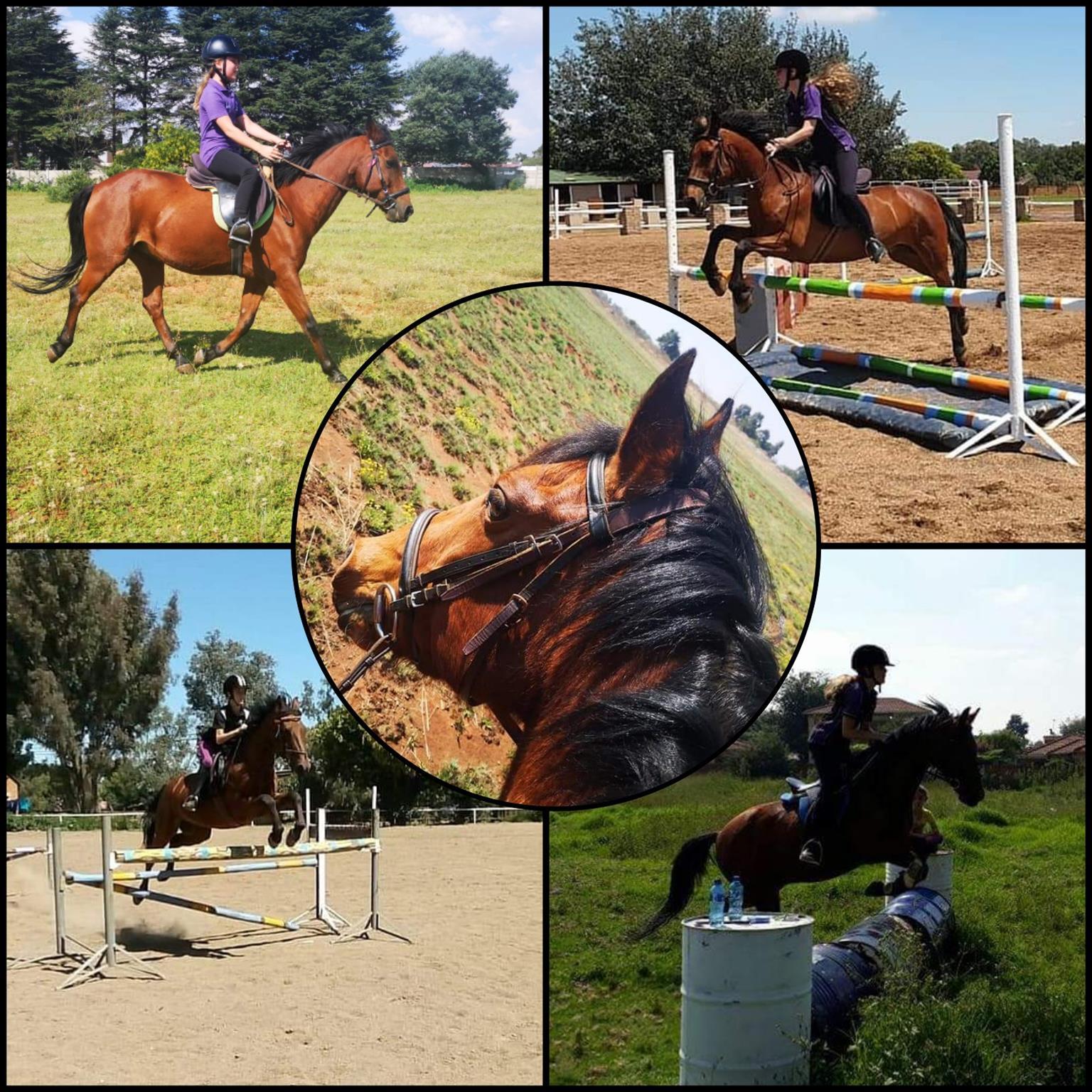 Super Boerperd Pony for urgent sale.