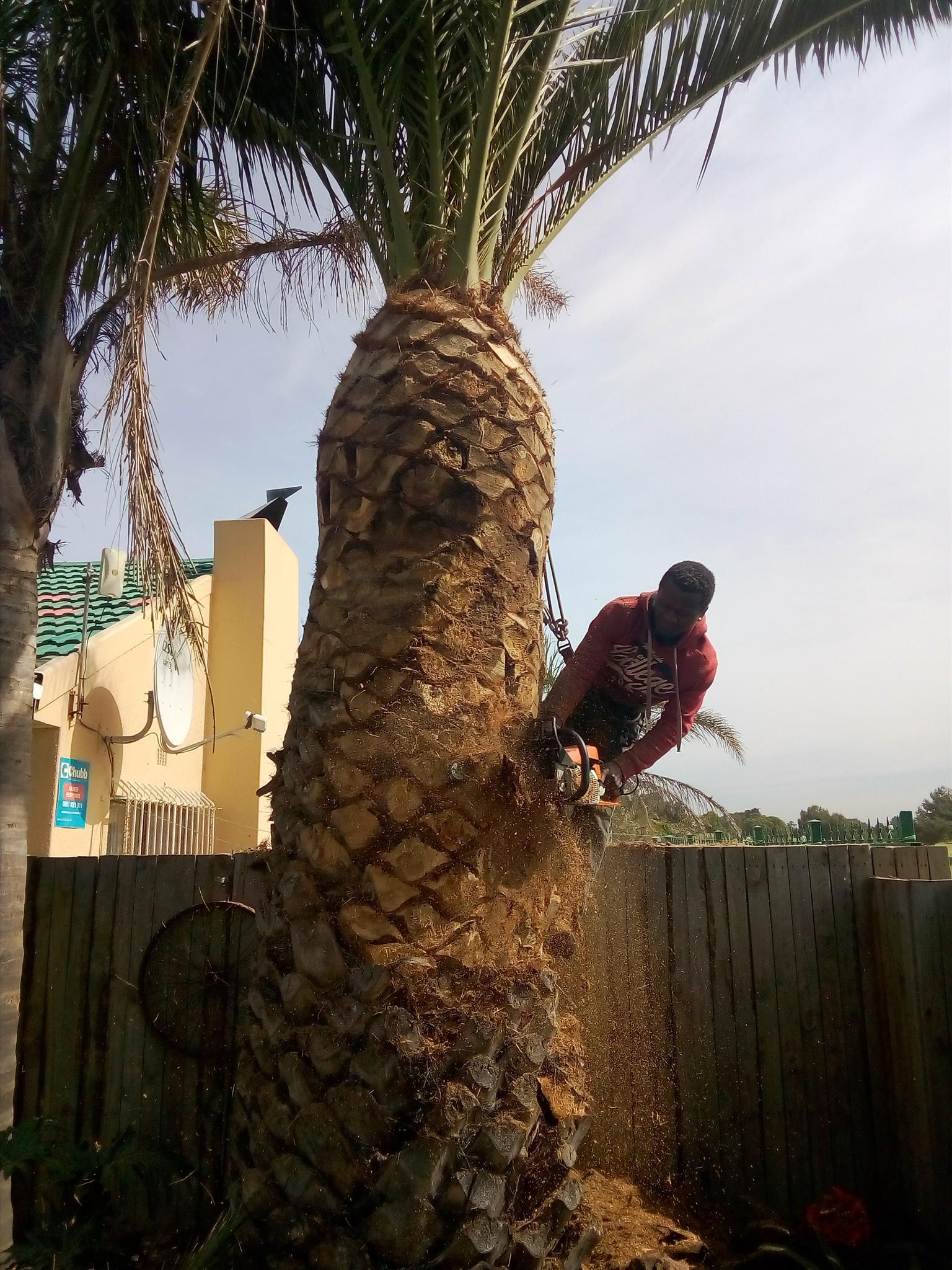 Monkey fam tree felling