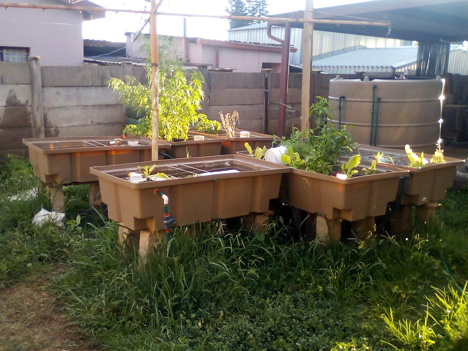 Fully functional Complete Aquaponics System