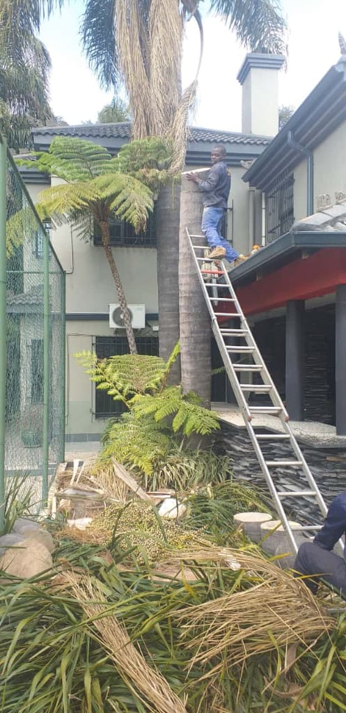 Tree felling and landscaping services
