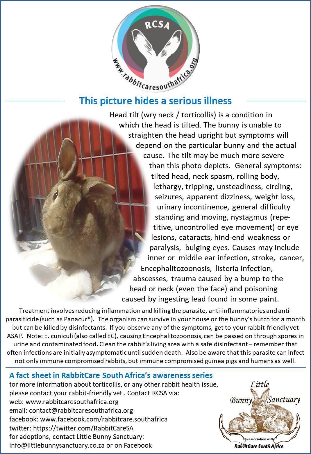 Free pet-rabbit educational material