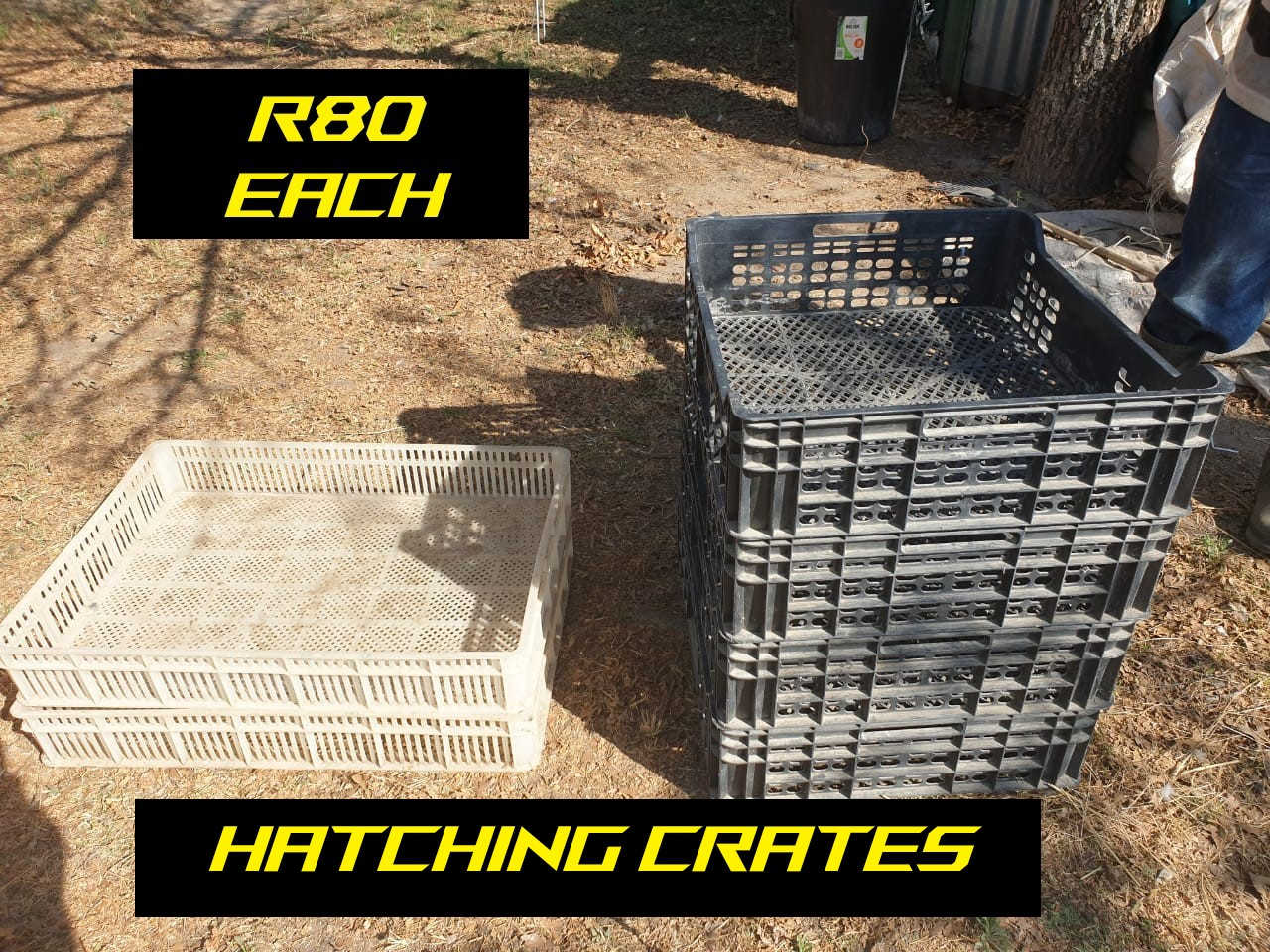 CRATES AND BOXES FOR CHICKENS AND QUAILS