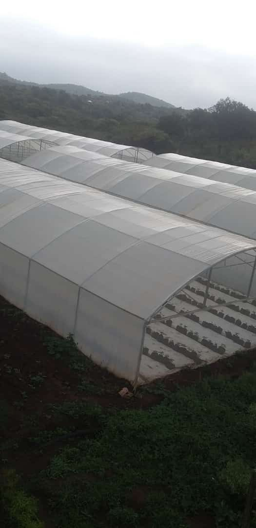 Vegetable tunnels greenhouses