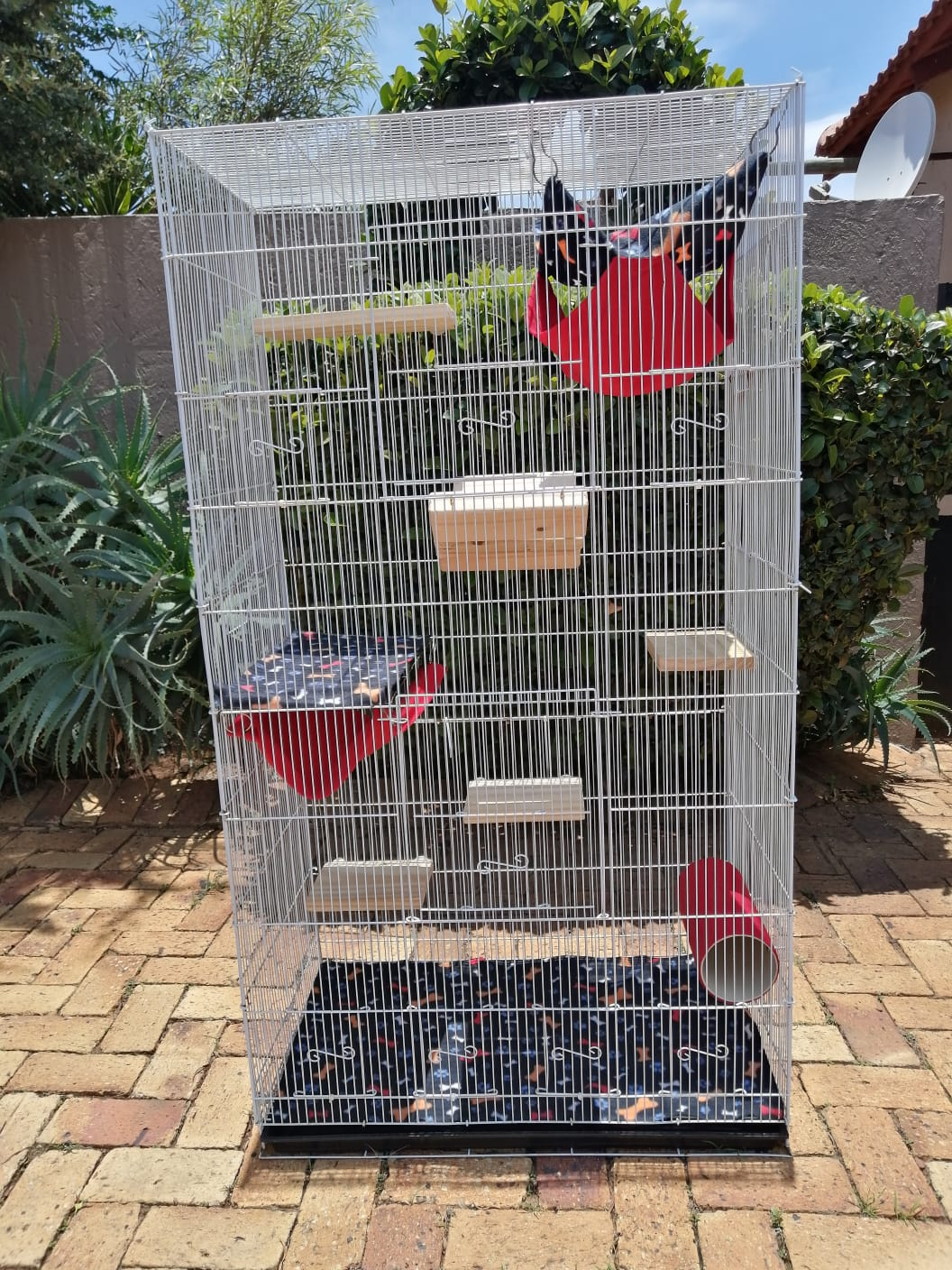 XLARGE chinchilla budget cages