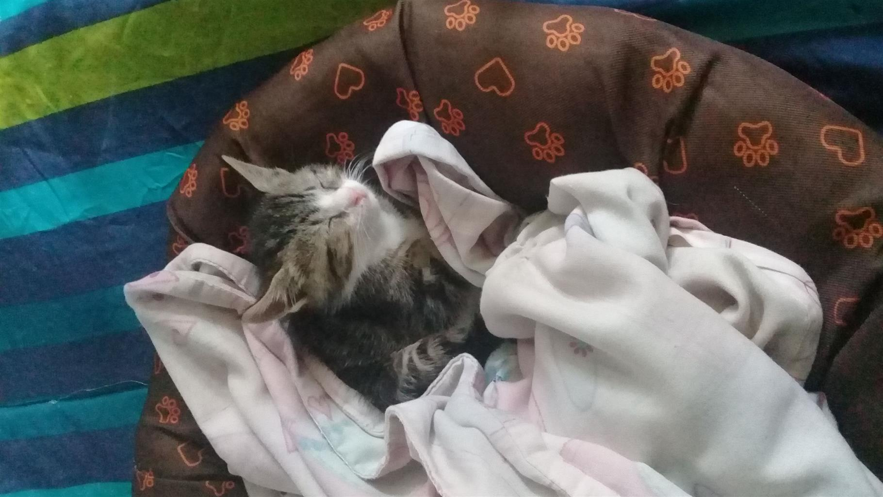 Kitten looking for a forever home
