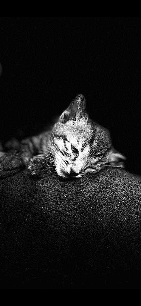Kitten plus Accessories