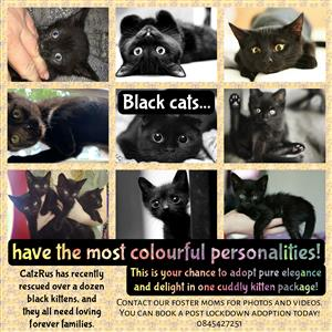 Adopt a kitten - At CatzRus we have so many purrfect furever companions to choose from! Vet care included.