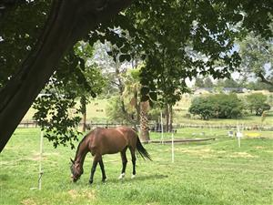 Horse Riding Midrand
