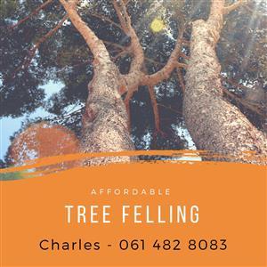 Tree felling etc