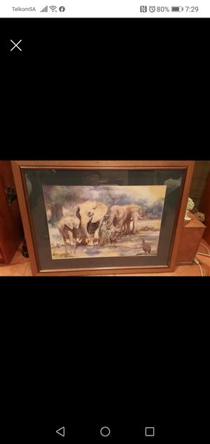 Wildlife pictures for sale