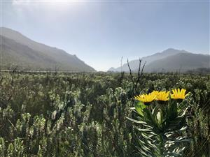 Beekeeper looking for more Fynbos areas to place beehives in exchange for honey to the land owner. Call 082 458 6081