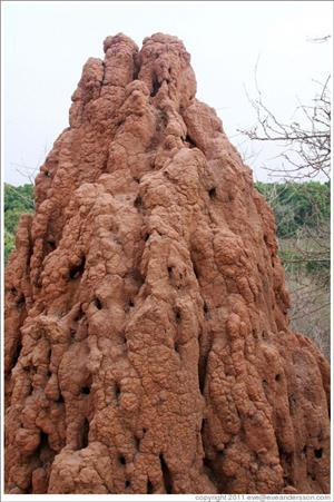DO YOU HAVE ANTHILL AND PEST THAT ARE TROUBLING YOU?